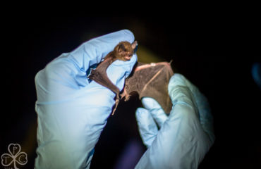 Indentifying Endangered Bat Species