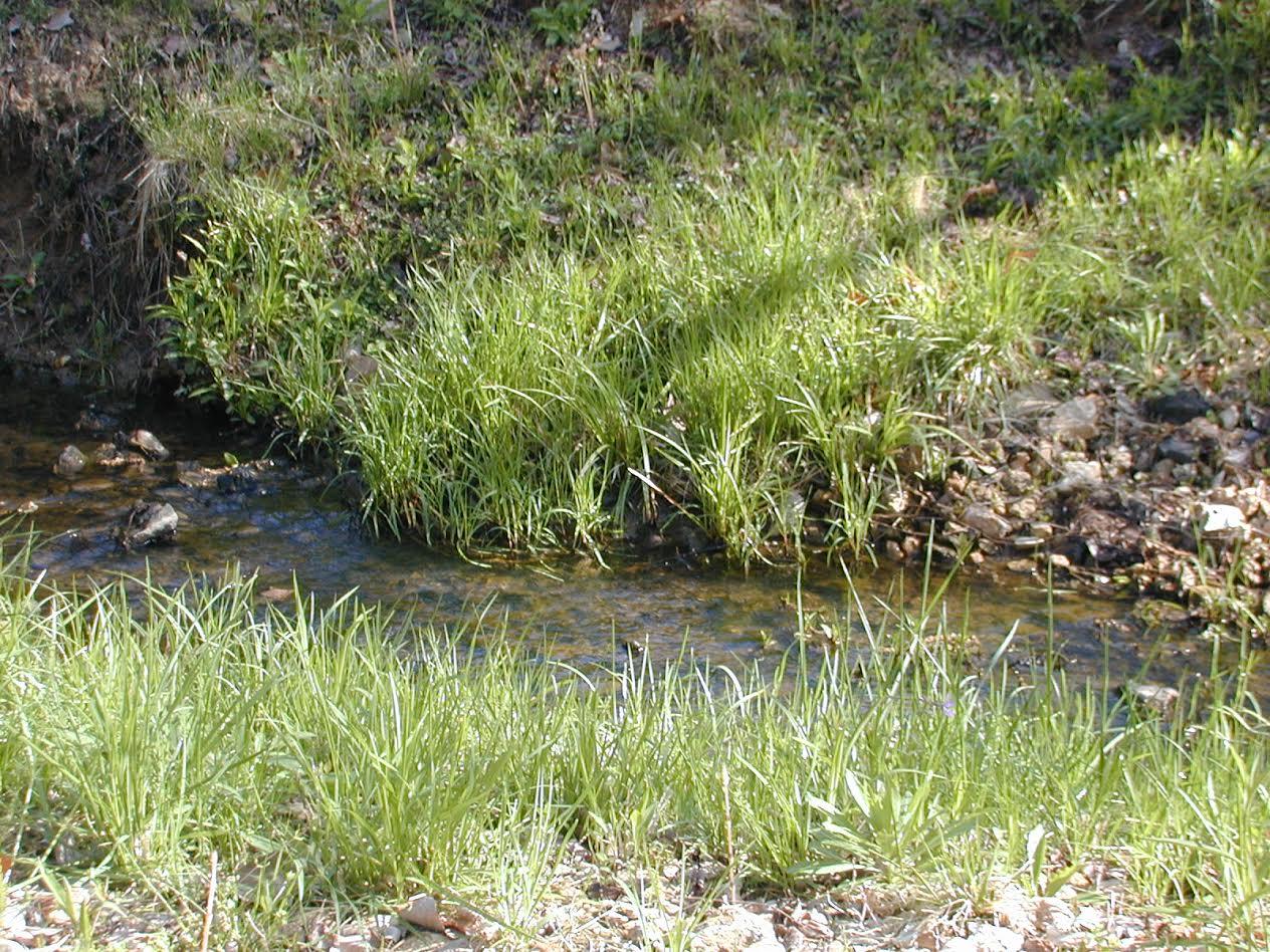 Madison County Wetland Mitigation Bank